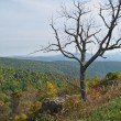 Tree Top Shenandoah — Stock Photo