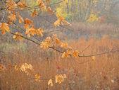 Autumn Maple Branch — Stock Photo