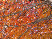Autumn Limbs — Stock Photo