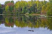 Herfst vijver — Stockfoto