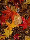 Bladeren in de regen — Stockfoto
