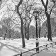 Stock Photo: Central Park Snow B&W