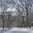 Snowfall on the Mall — Stockfoto