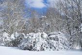 Snow Day — Stock Photo