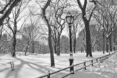 Central Park Snow B&W — Stock Photo