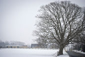 Roadside Winter Tree — Stockfoto