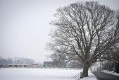 Yol kenarındaki kış ağaç — Stok fotoğraf