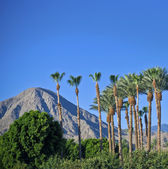 Palm Springs View — Stock Photo