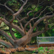 Stock Photo: Dream Tree