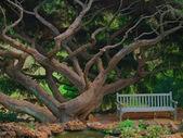 Dream Tree — Stock Photo