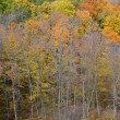 Autumn Forest View — Stock Photo