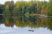 Autumn Pond — Stock Photo
