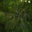 Spiderweb — Stock Photo #12845657