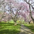 Spring Path in Park - Stock Photo
