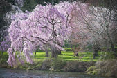 Vibrant Spring — Stock Photo