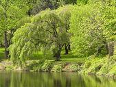 """Reflexiones de primavera"""" — Foto de Stock"""