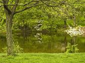 美丽的春天 — 图库照片