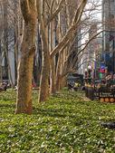 """Bryant Park Trees"" — Stock Photo"