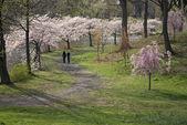 """Spring Walk"" — Stock Photo"