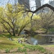 Peaceful Central Park — Stock Photo