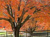 秋の陰 — ストック写真
