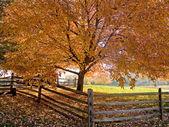 Cień jesień — Zdjęcie stockowe