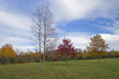 Podzimní stromy v parku — Stock fotografie