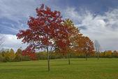 Podzimní etapy — Stock fotografie