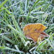 Frost on Leaf — Stock Photo