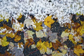 Leaves and Snow — Stock Photo