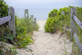 Cape Cod Pathway — Stock Photo