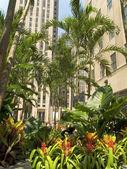 City Palms — Stock Photo