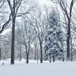 Winter Scene Central Park — Stock Photo