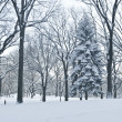 Winter Scene Central Park — Stock Photo #13881232