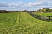Paisagem rural — Foto Stock