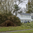 Stock Photo: Downed Tree 4