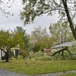 Stock Photo: Downed Tree 5