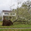 Stock Photo: Downed Tree 1