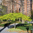 Stock Photo: Tudor City Greens