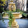 Lion Head Planter — Stock Photo