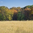 Autumn Field Panorama — Stock Photo