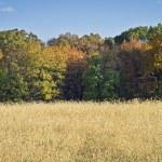 Autumn Field Panorama — Stock Photo #29436671