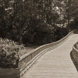 Stock Photo: Wooden Trail