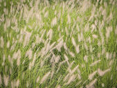 Wispy Weeds — Stock Photo