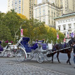 Horse and Buggy Central Park — Stock Photo