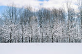 Fresh Snow — Stock Photo