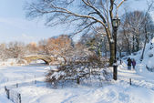 Winter Walk in the Park — Stock Photo
