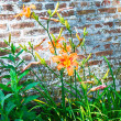 Stock Photo: Tiger Lillies and Wall