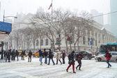 Sexto nieve ave — Foto de Stock