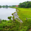 Cape Cod Marshland — Stock Photo